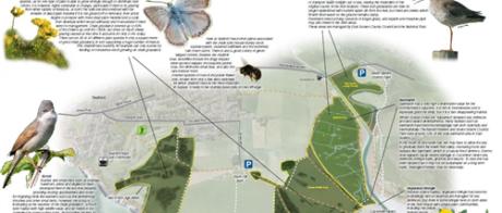 information leaflet on Seaford Head Nature Reserve
