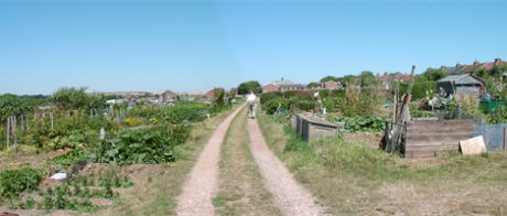Sutton Drove Allotments