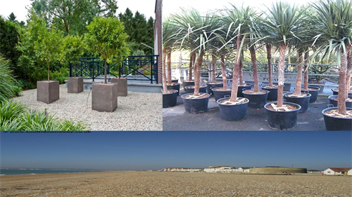 A collage of photographs showing examples of trees and planting